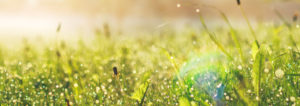 Grünes, saftiges Gras. Erdwaermepumpen sole Wasser der Firma Haesler AG.