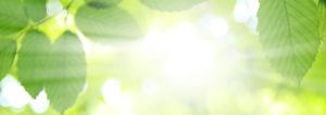 Sonne die durch grüne Blätter durchscheint. Die Firma Haesler AG ist der Profi für Luftwaermepumpen Luft Wasser.